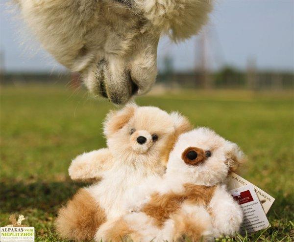 Alpakabär Teddy klein - Deko-Artikel