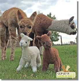 Plüschtier Alpaka Lama in Braun oder Weiss