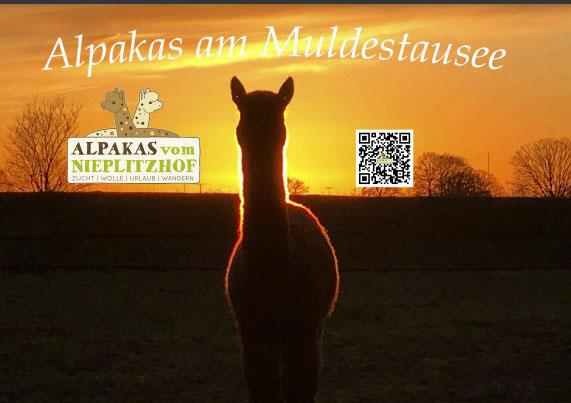Alpaka Wand Kalender 2018 in DINA4 Querformat